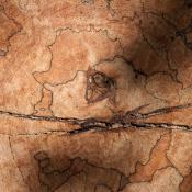 Jigsaw 1310 - 1892 #Oranjewoud