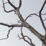 Corrosion #houtwerk #oranjewoud 0256-171016