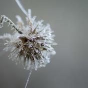 Breakable #heerenveen #thistle #plantwerk 1812-171201