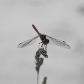 Cool Dragonfly 1208 - 0957 #Rotstergaast